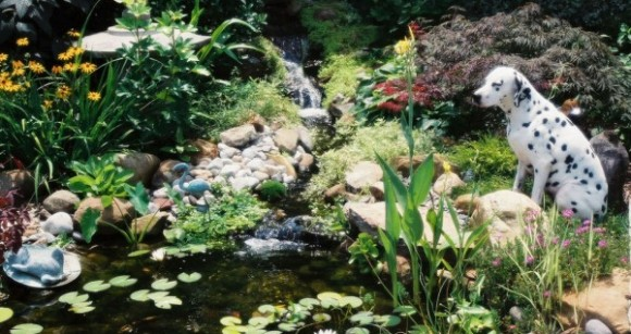 dog-pond
