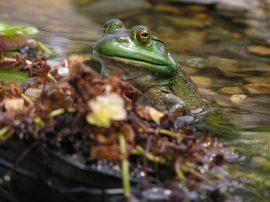 A Happy Frog