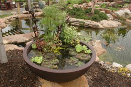 patio-pond-5