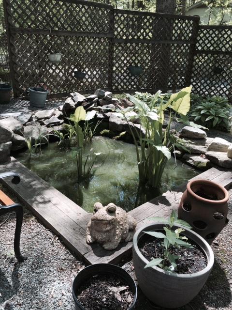 Chapel Hill Pond Management