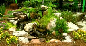 aquatic plants Raleigh nc