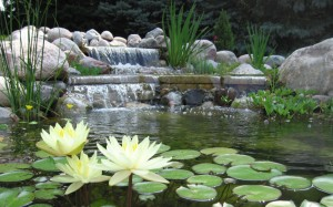Goldfish & Koi Pond services in Raleigh, NC