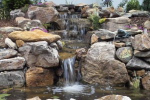 Chapel Hill Backyard Ponds