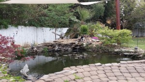 Pond contractors Raleigh NC